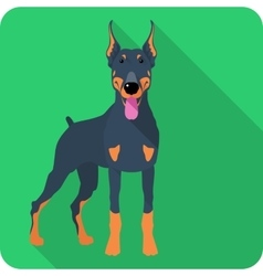 Dog doberman pinscher icon flat design vector