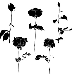 Black and white collection of rose icons vector image