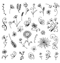 Sketch of floral elements for your design vector image vector image