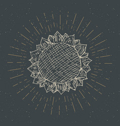 sunflower sketch vintage label hand drawn grunge vector image