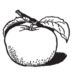 Apple vintage vector