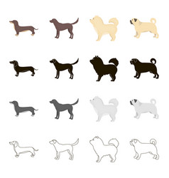 Dog dachshund chow chow pug breed labrador dog vector