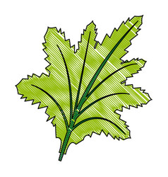Leaf nature plant foliage flora icon vector