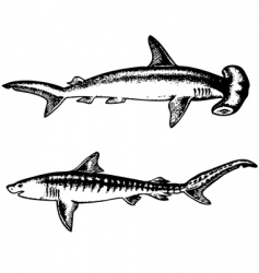 sharks vector image vector image
