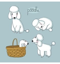 Set of cute poodle in different poses vector