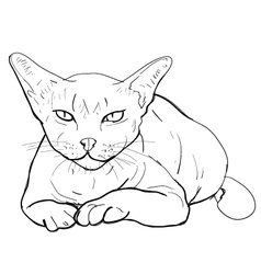 Serious cat vector image