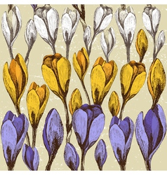 crocus flowers vector image