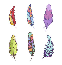 decorative feather set vector image vector image