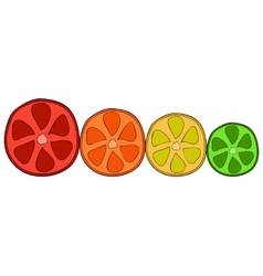 Doodle citrus slices vector image vector image