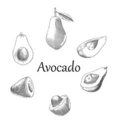 Avocado hand drawing engraving style vector