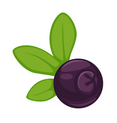 Blueberry dark purple fruit with green leaves vector