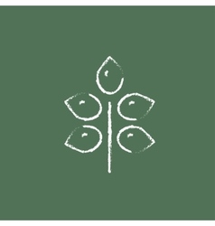 Branch with leaves icon drawn in chalk vector