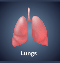Realistic human lungs isolated on dark gray vector