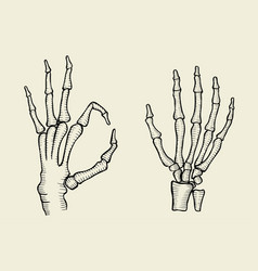set of skeleton hand vector image