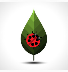 Ladybird on a green leaf vector