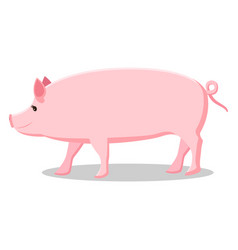 pink pig with curly tail isolated vector image vector image