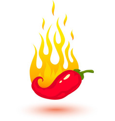red chili fire vector image