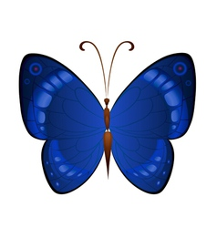 Dark blue butterflies vector