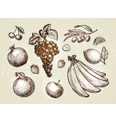 Hand drawn fruits Sketch vector image