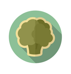 cauliflower flat icon vegetable vector image vector image