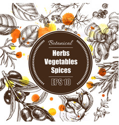 Background - spices herbs vegetables vector