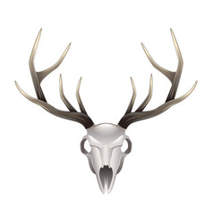 deer skull front view isolated vector image vector image
