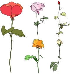 set multicolored roses vector image vector image