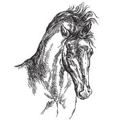 Horse head hand drawing vector