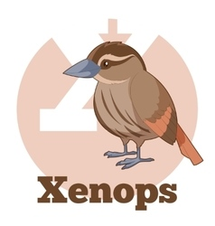 Abc cartoon xenops vector