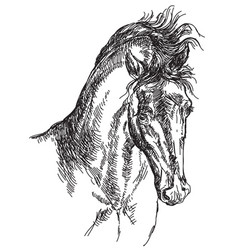 horse head hand drawing vector image