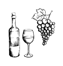 Sketch of wine bottle glass and grapes vector image
