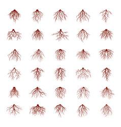 big set of brown roots vector image