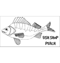 Perch fish doodle in lines on white background vector