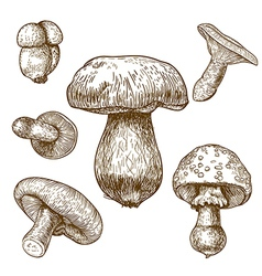 Engraving mushrooms vector