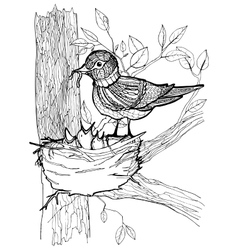 Coloring page with birds vector