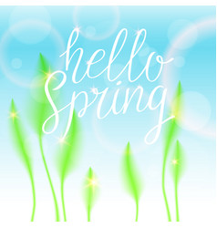 hello spring bright bird feathers on a white vector image