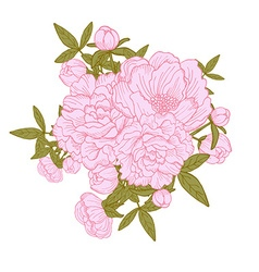 peony floral bouquets vector image vector image