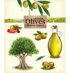 Realistic of fruit olives vector