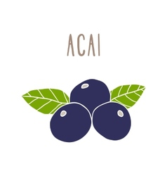Acai berries superfood vector