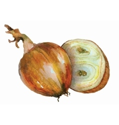 Hand drawn watercolorof yellow onion on white vector
