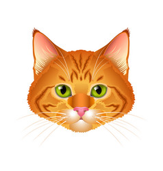 red cat realistic portrait isolated vector image vector image