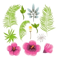 Set of exotic tropical flowers and palm leaves vector