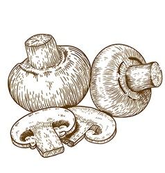 Engraving champignons vector