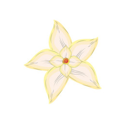 Chamomile flower with petals to organic ingredient vector