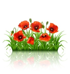 Red poppies in grass vector