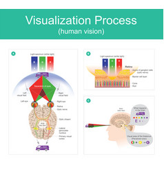 visualization process human vision vector image