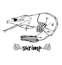 Shrimp in lines on white background vector