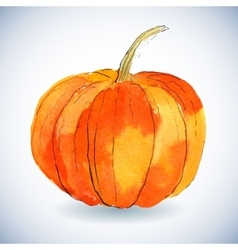 Watercolor pumpkin on white background vector