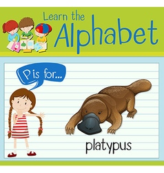 Flashcard letter P is for platypus vector image