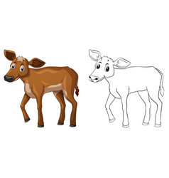 animal outline for little cow vector image